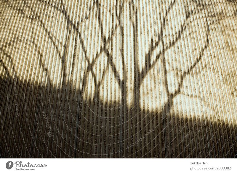 Shadow again Branch Tree Facade Spring Seam Autumn Light Wall (barrier) Deserted Parallel Perspective Tree trunk Copy Space Wall (building) Concrete Twig