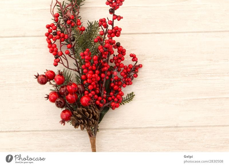Red fruits on the branch Christmas for decoration Nature Christmas & Advent Plant Colour Green White Tree Leaf Winter Wood Feasts & Celebrations Copy Space Gray