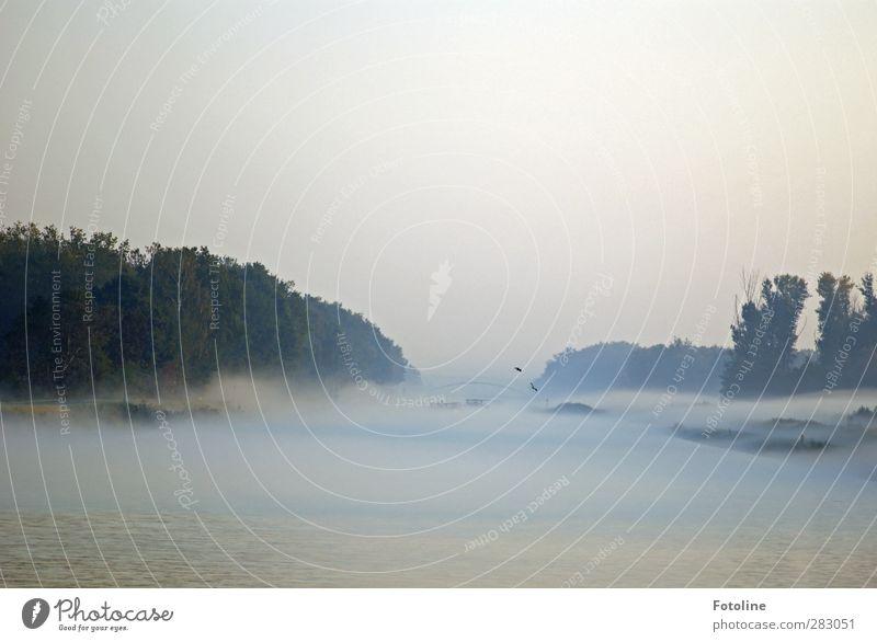 Sky Nature Water Plant Tree Animal Landscape Environment Autumn Coast Bright Natural Fog Wet Elements River