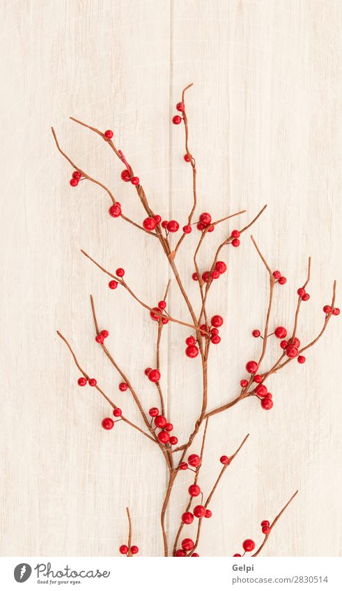 Christmas branch with red berries Fruit Winter Decoration Feasts & Celebrations Christmas & Advent Nature Plant Tree Leaf Wood New Many Gray Green Red White