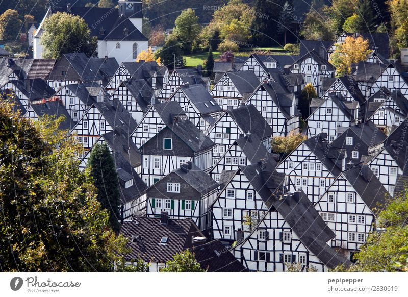 Freudenberg Vacation & Travel Tourism Trip City trip Living or residing Flat (apartment) House (Residential Structure) Summer Tree freudenberg
