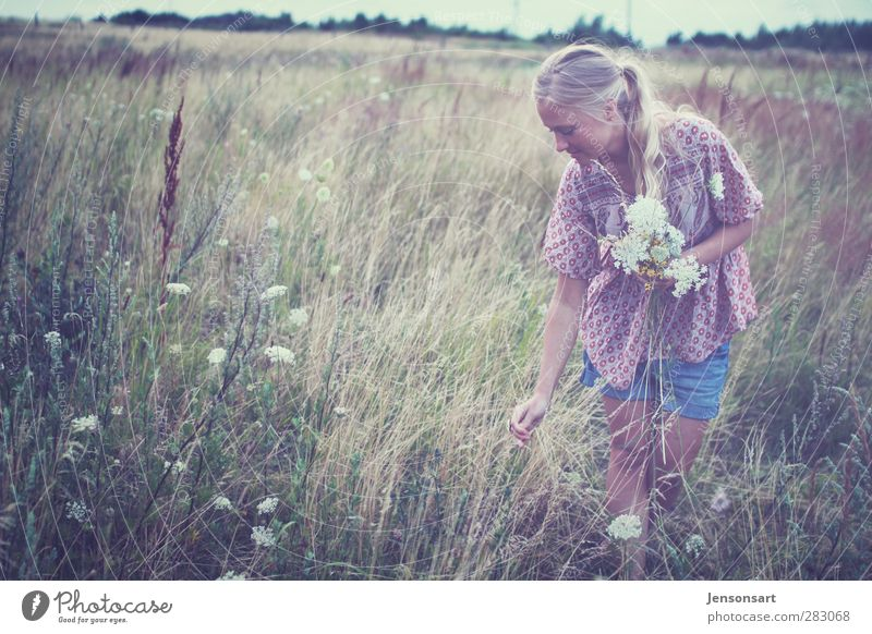 Blond girl on a flower meadow Human being Feminine Young woman Youth (Young adults) Life 1 18 - 30 years Adults Nature Summer Meadow Blonde Braids Beautiful
