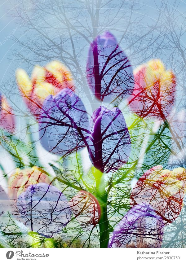 Tulips bouquet tree double exposure Art Nature Plant Spring Autumn Winter Tree Flower Bouquet Blossoming Illuminate Blue Yellow Gold Green Violet Orange Pink