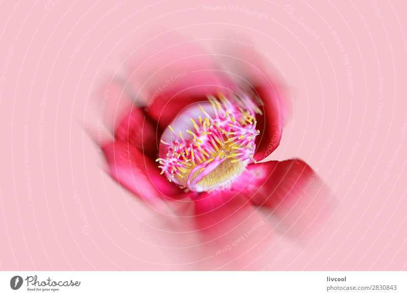 red flower defocused on pink background Beautiful Relaxation Nature Plant Elements Flower Blossom Exotic Authentic Exceptional Cool (slang) Cute Pink Red
