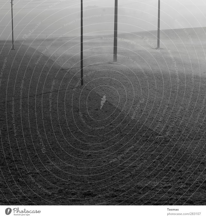 Calm Landscape Field Fog Esthetic Electricity pylon Telegraph pole