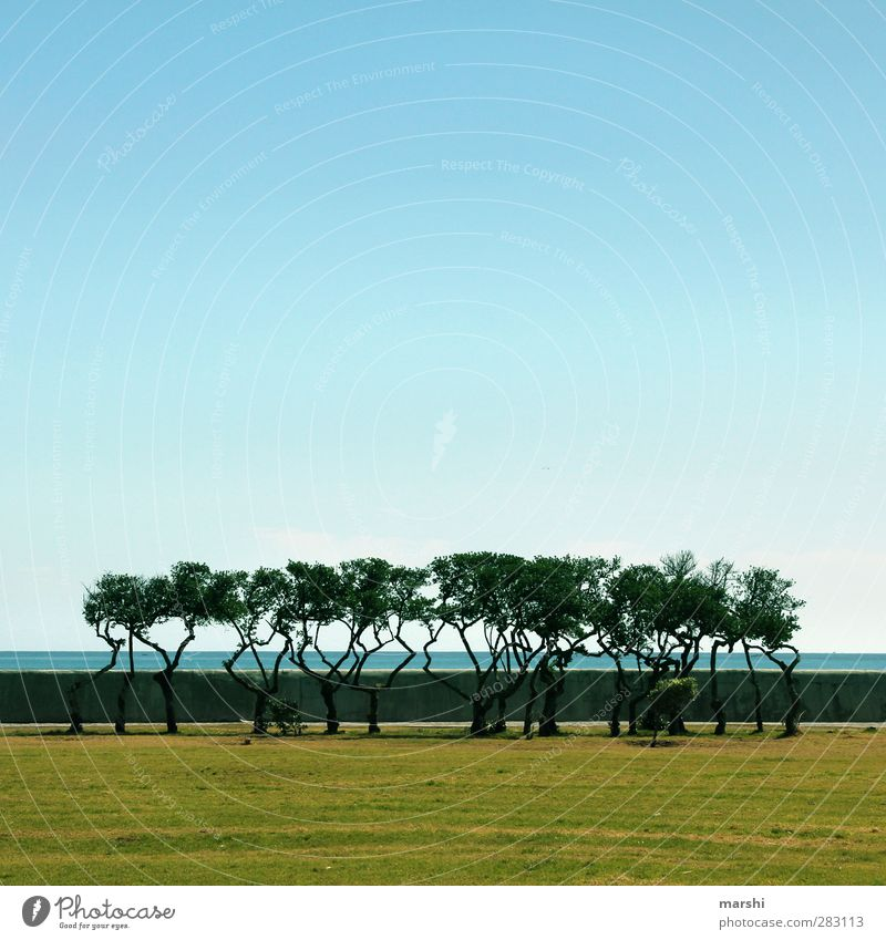winched Nature Landscape Plant Spring Summer Tree Blue Brown Green Coast South Africa Sea promenade Grass surface Sky Far-off places Travel photography
