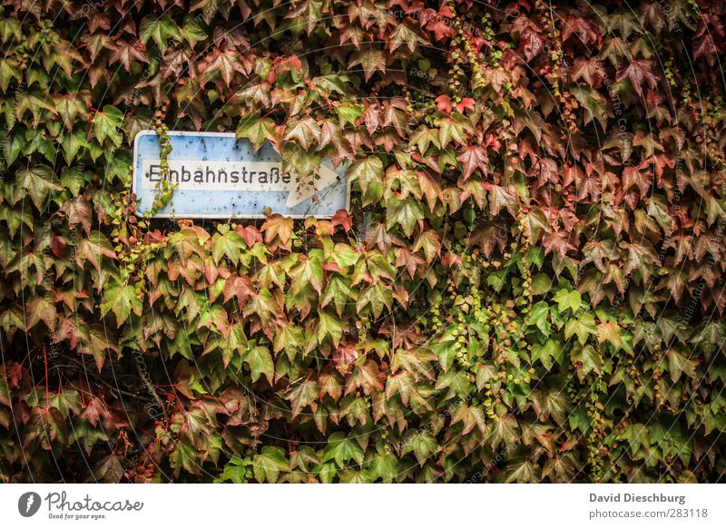 Autumn vs. STVO Nature Plant Animal Beautiful weather Ivy Leaf Transport Road traffic Road sign Blue Brown Multicoloured Yellow Green Orange Red Black White