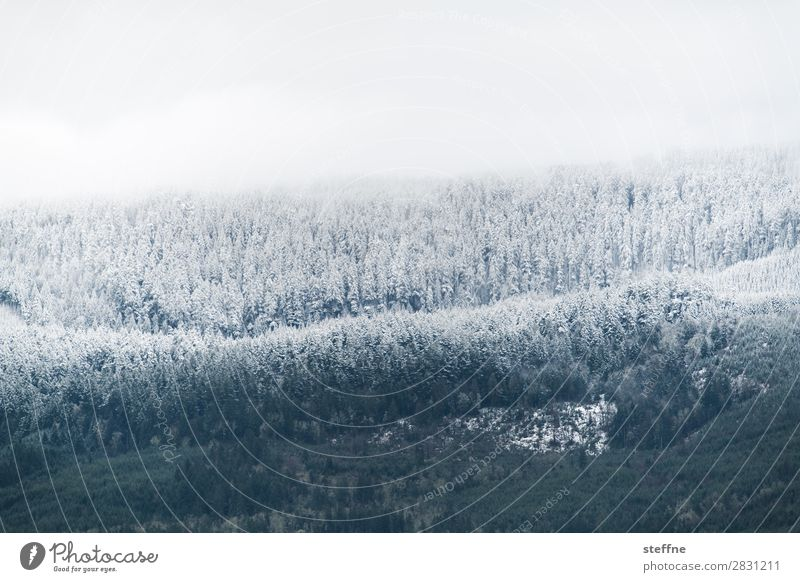 cooling down Winter Ice Frost Snow Tree Forest Mountain Cold Freeze to death Hoar frost Snowfall limit USA Oregon Colour photo Exterior shot Deserted