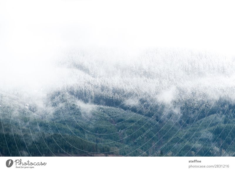 letitsnow Winter Ice Frost Snow Snowfall Forest Mountain Cold Hoar frost Snowfall limit USA Oregon Colour photo Exterior shot Deserted Copy Space top