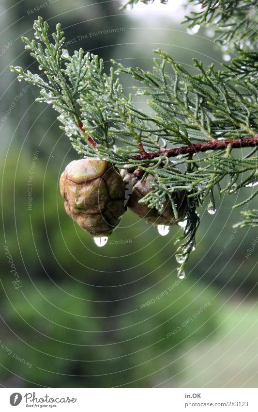 Nature Green Tree Brown Rain Drops of water Hang