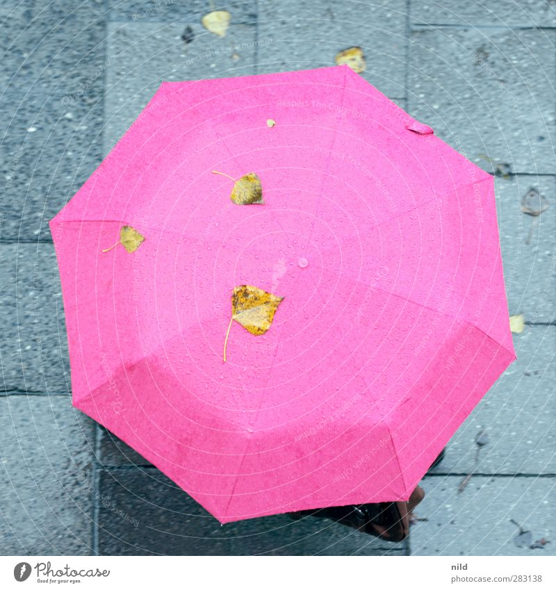 Human being City Leaf Cold Autumn Healthy Going Rain Weather Common cold Umbrella Sidewalk Bag Autumnal Bad weather