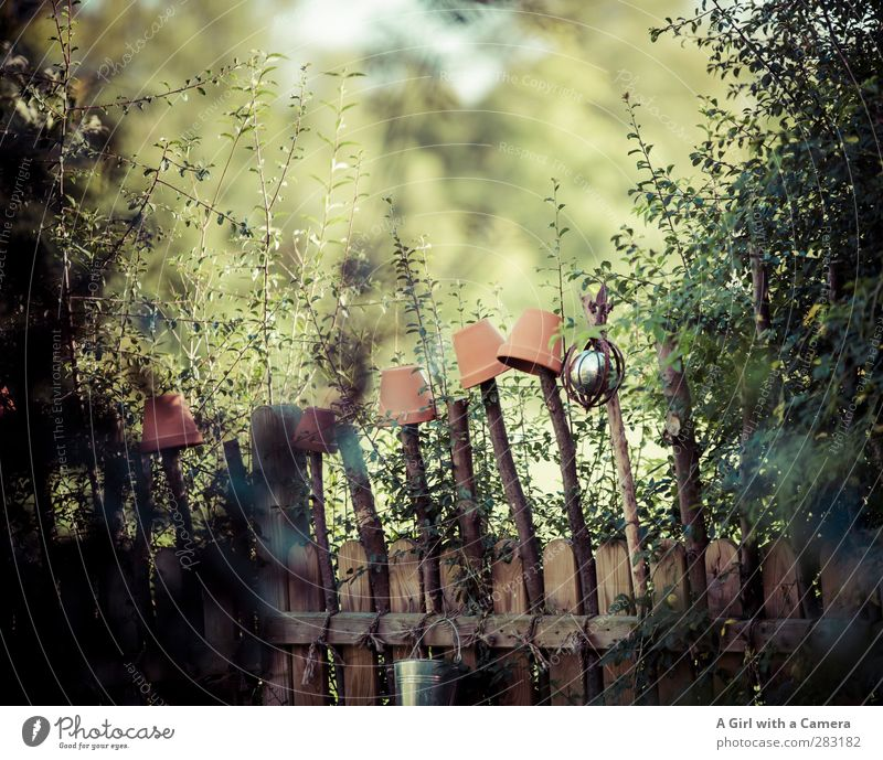 along the fence 2 Environment Nature Plant Garden Wild Flowerpot Fence Hedge Barrier Protection Subdued colour Exterior shot Deserted Copy Space top Day Light