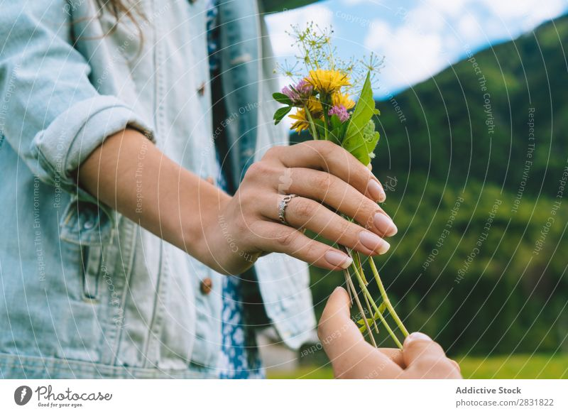 Woman taking small bunch Couple Meadow Flower Gift Small Nature Summer Human being
