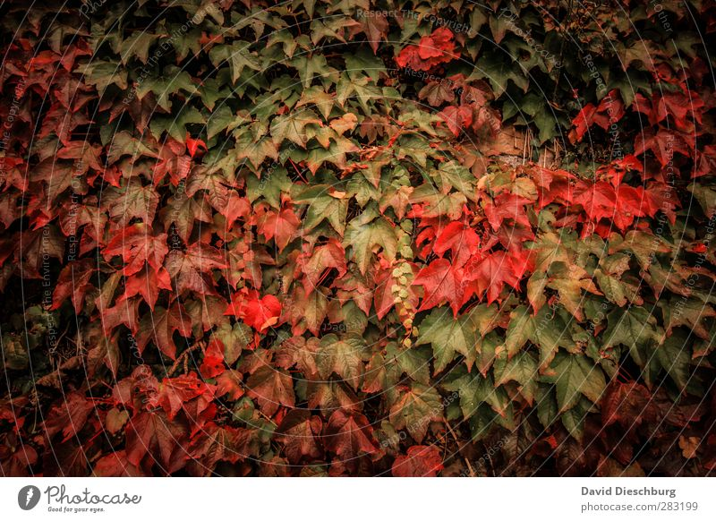 favorite season Nature Plant Animal Autumn Leaf Garden Park Forest Yellow Green Orange Red Black Autumn leaves Autumnal Autumnal colours Early fall