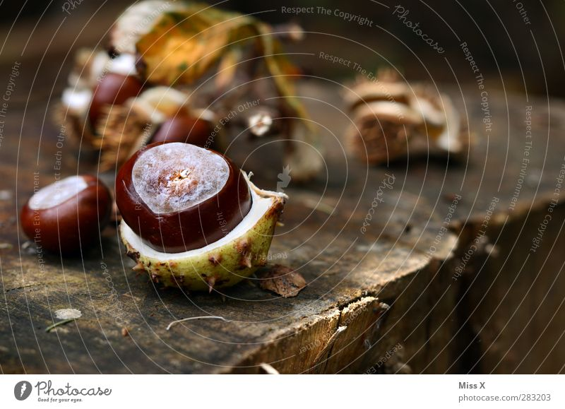 autumn Nature Autumn Forest Brown Chestnut tree Chestnut leaf Wood Tree trunk Annual ring Tree fruit Sheath Open Colour photo Exterior shot Close-up Deserted