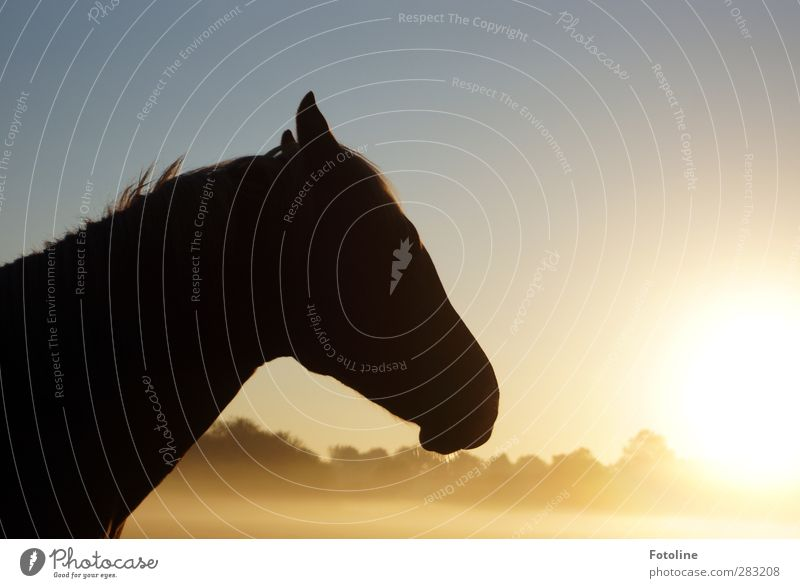 Allow me: Hotte, Hotte Hüh Environment Nature Plant Animal Sky Cloudless sky Sun Autumn Beautiful weather Fog Tree Horse Animal face Pelt 1 Bright Cold Natural