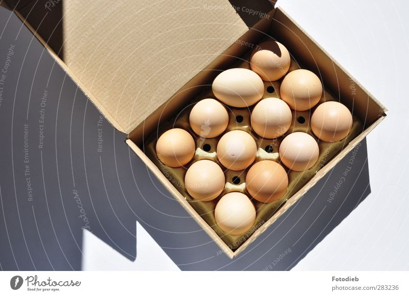 Think outside the box Food Egg Breakfast Chicken Paper Packaging Sharp-edged Round Brown Cardboard packaging Cardboard box Shadow Colour photo Detail Deserted