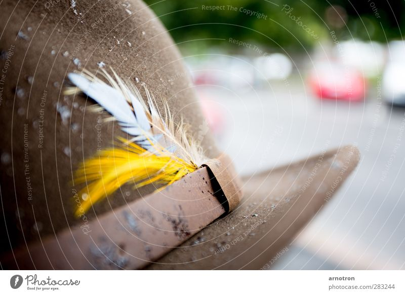 put your hat on when it's raining Clothing Felt Felt hat Accessory Hat Leather Brown Yellow Patient Feather headdress Colour photo Close-up Deserted