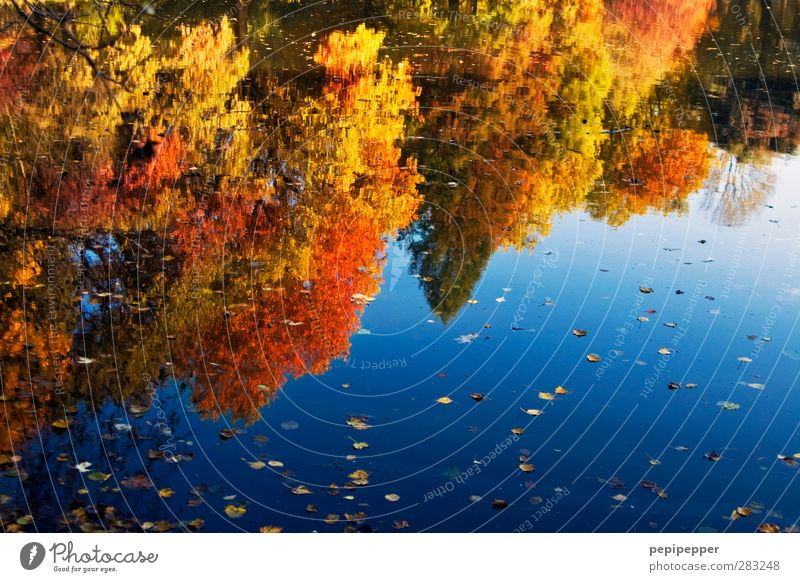 Indian buzzer Nature Landscape Plant Animal Water Sky Tree Park Forest Lakeside Blue Yellow Gold Red Idyll Indian Summer Autumn leaves Autumnal Multicoloured