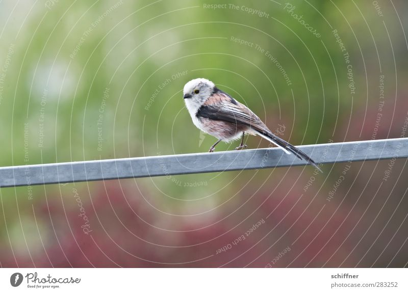 Beautiful Loneliness Animal Small Bird Wild animal Banister Songbirds Tit mouse