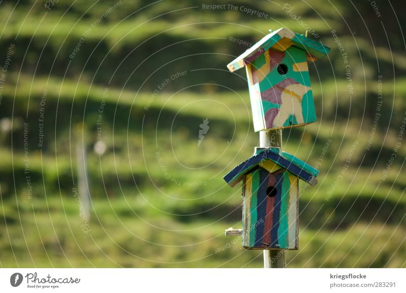 dorm Painter Nature Meadow Hill House (Residential Structure) Bird Multicoloured aviary Love of animals Home country slanting Colour photo Exterior shot