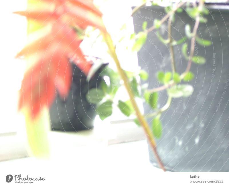 windowsill01 Flower Plant Green Window board Leaf green