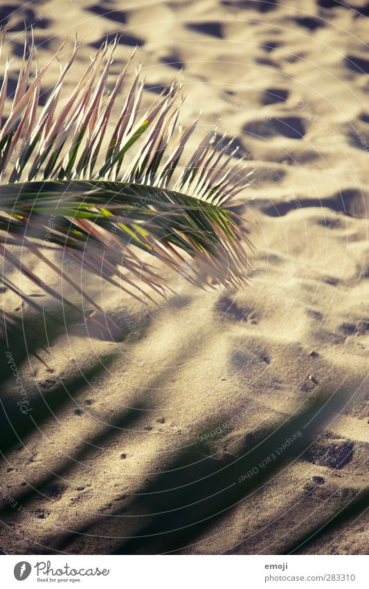 sand between the toes Environment Nature Summer Climate Beautiful weather Warmth Drought Plant Natural Dry Sand Sandy beach Beach Palm frond Palm beach