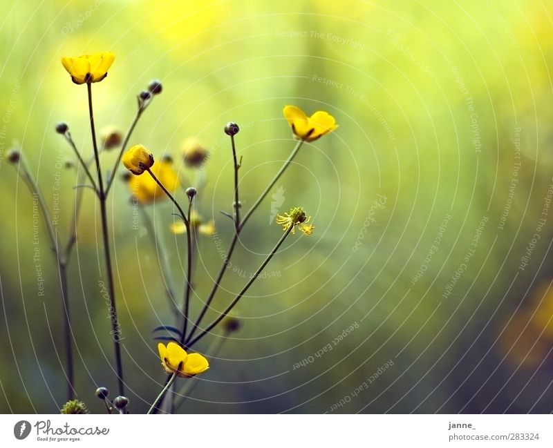 meadow flowers Nature Plant Grass Meadow Yellow Green Colour photo Multicoloured Close-up Light Sunlight Blur