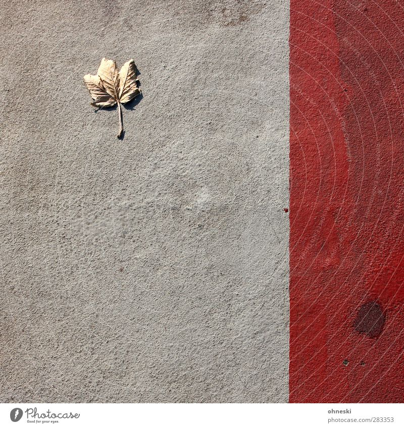 URBAN NATURE Autumn Leaf Maple leaf Maple tree Lanes & trails Sidewalk Concrete Line Red Loneliness Decline Colour photo Exterior shot Abstract Pattern
