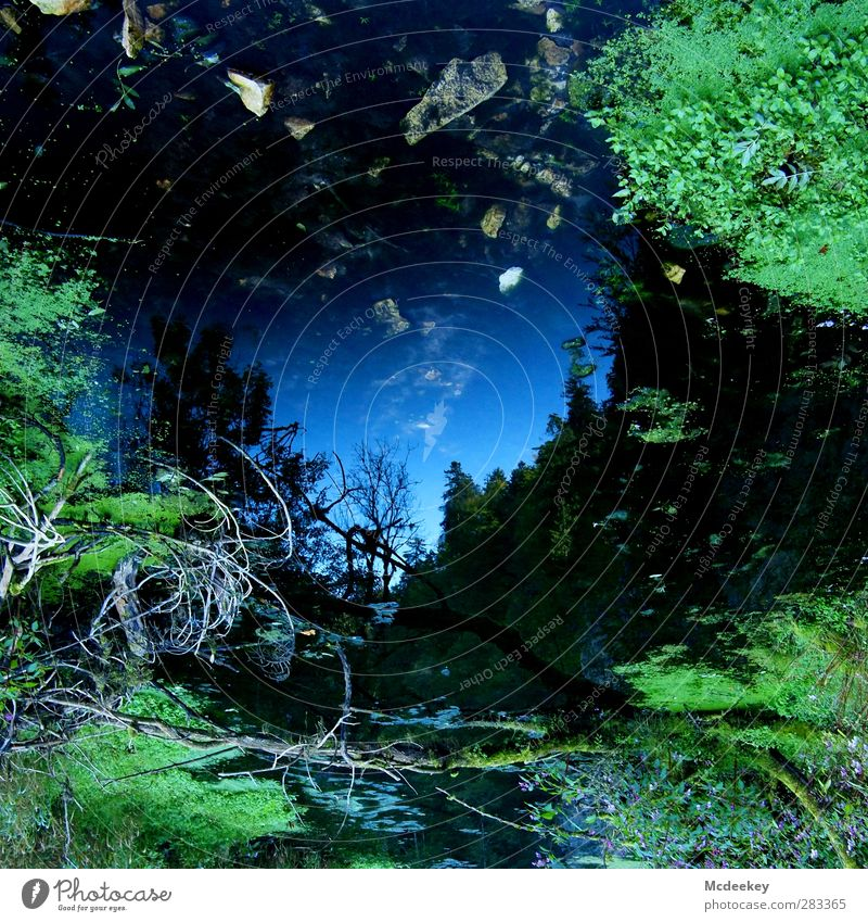 Mirror, mirror on the wall,... Environment Nature Landscape Plant Water Cloudless sky Summer Beautiful weather Tree Grass Moss Leaf Forest Bog Marsh Pond