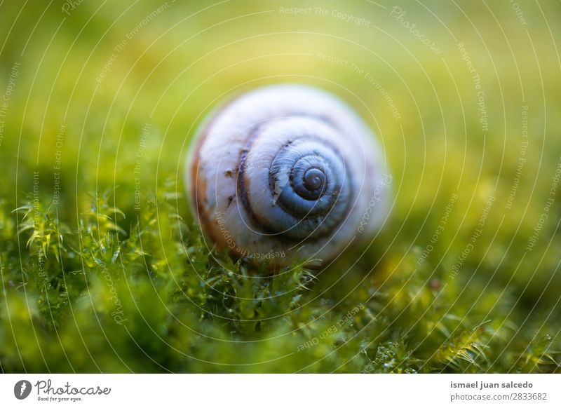 snail in the nature Snail Animal Bug White Insect Small Shell Spiral Nature Plant Garden Exterior shot Fragile Cute Beauty Photography Loneliness background