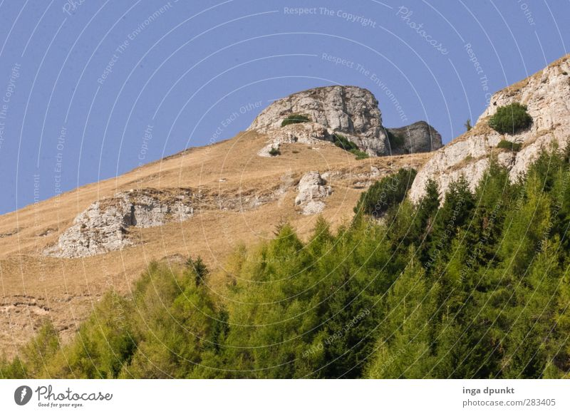 timber line Environment Nature Landscape Sky Cloudless sky Plant Tree Hill Rock Mountain Peak Growth Natural Adventure Vacation & Travel