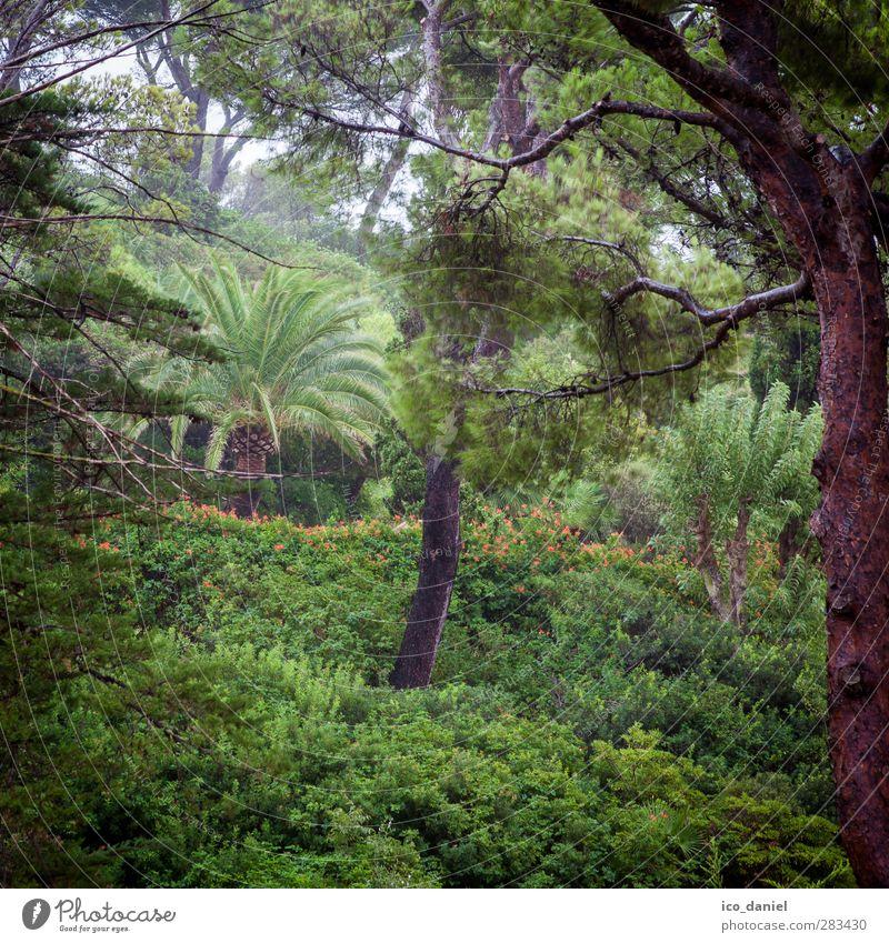 rainforest Environment Nature Landscape Plant Animal Elements Summer Climate Weather Bad weather Wind Fog Rain Foliage plant Garden Park Forest Wet Green