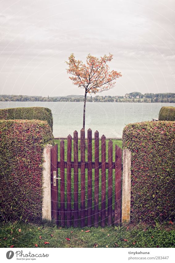 Plot with lake view Garden Autumn Tree Hedge Lakeside Wörth Lake Fence Small Retro Gloomy Orderliness Loneliness Arrangement Colour photo Exterior shot Deserted