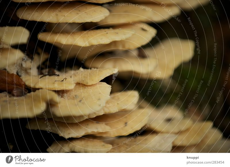 layer fungi Environment Nature Elements Earth Sun Sunlight Autumn Beautiful weather Plant Tree Old To dry up Growth Dark Firm Together Wet Warmth Wild Yellow