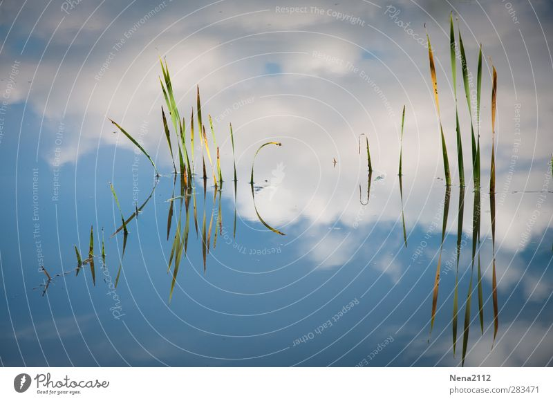 )IIII( )iIIIII Nature Plant Blue Abstract Reflection Water Bamboo Clouds Sky Pond Lake Colour photo Exterior shot Close-up Detail Light Contrast