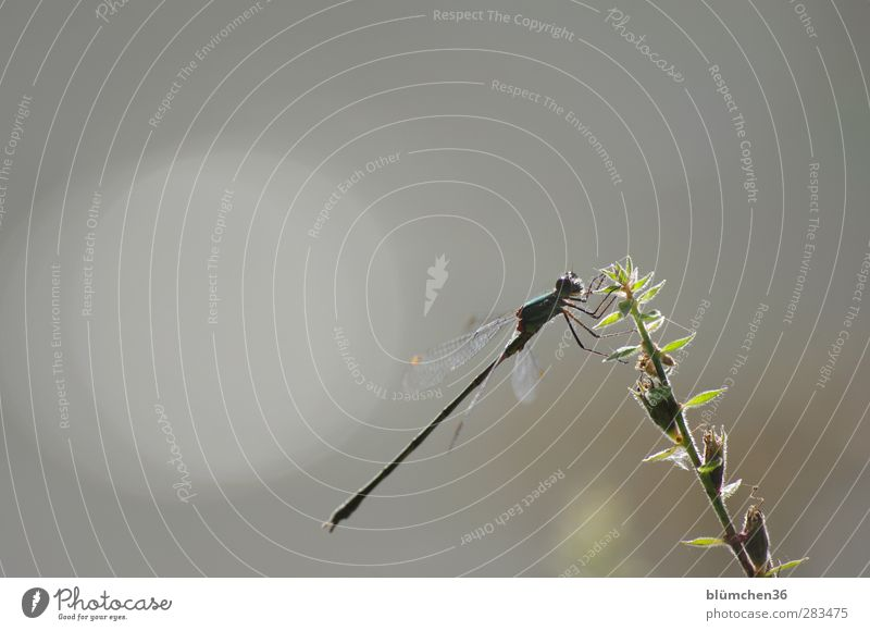 sit and wait Nature Animal Wild animal Dragonfly Dragonfly wings Compound eye Flying Looking Sit Exotic Green Elegant Lakeside Pond Natural Free Ease Sunbathing