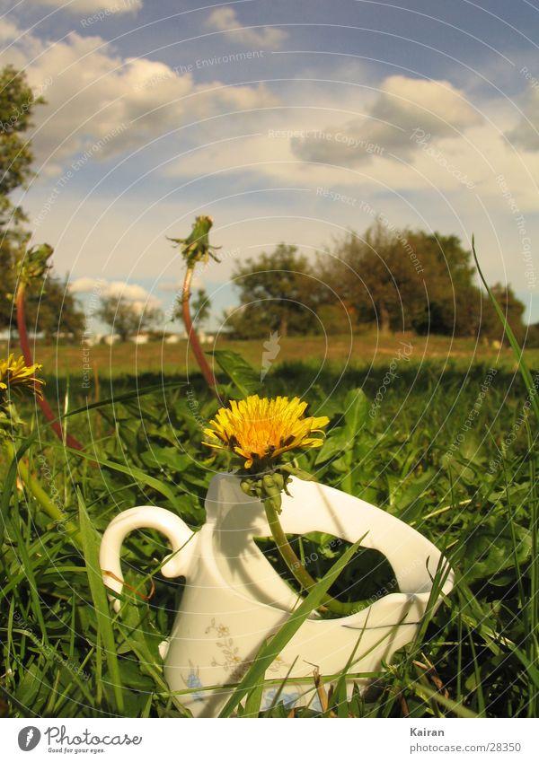 Flower Summer Meadow Broken Dandelion Cup Bright Colours