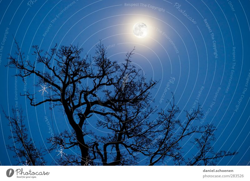 all vampires fly high! Environment Nature Sky Cloudless sky Night sky Moon Full  moon Winter Threat Dark Creepy Blue Treetop Subdued colour Copy Space right