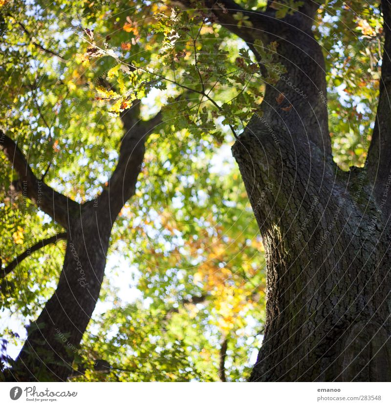 Nature Green Plant Tree Leaf Landscape Forest Yellow Environment Autumn Garden Brown Park Natural Branch Tree trunk