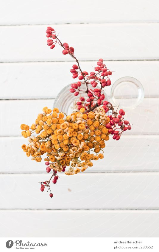 quiet life in red and yellow. Glass Esthetic Red Yellow Vase Bird's-eye view Plant Flower Line Stool Wood Structures and shapes Calm Orange Dried Dried flower