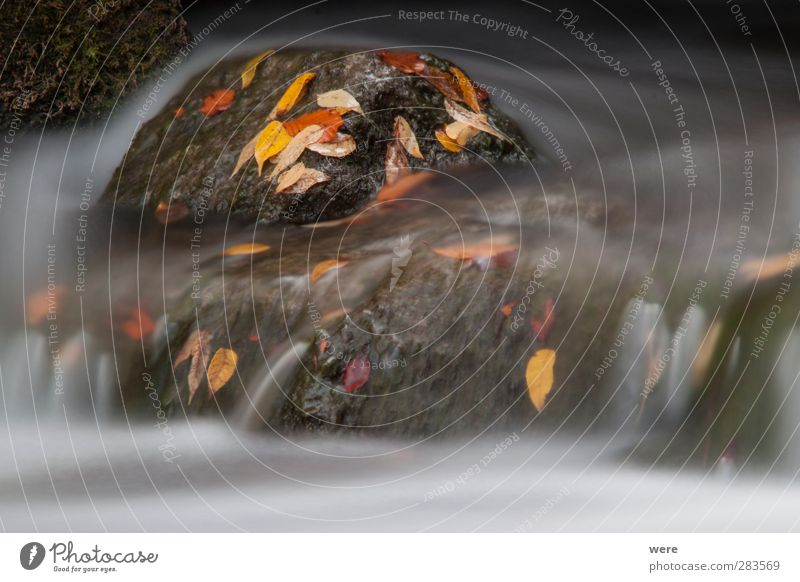 Rock in the stream Landscape Plant Water Autumn Leaf Brook River Waterfall Stone Moody Power Patient Flowers and plants Autumnal colours Japan Japan garden