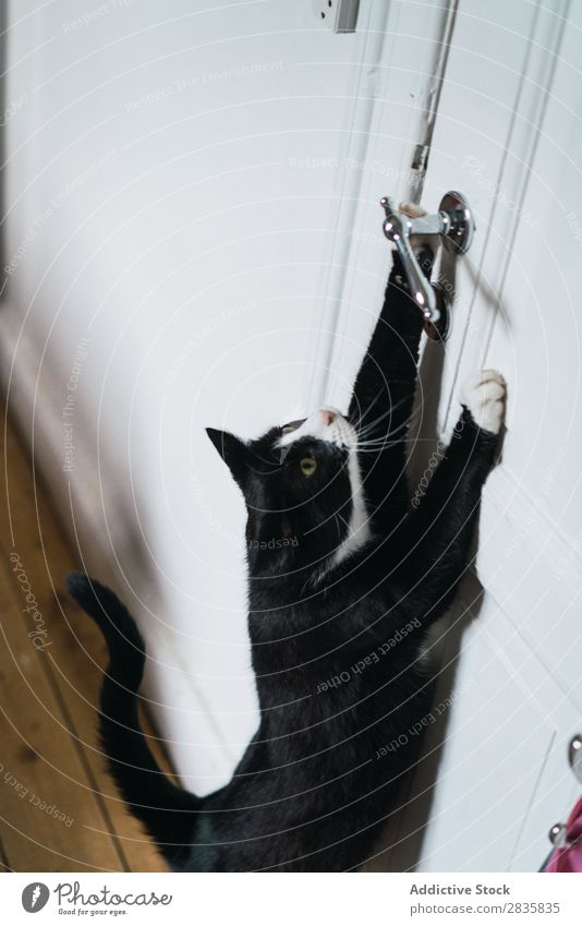 Cute cat stretching to door handle Cat Home Stretching Door Handle Pet Animal