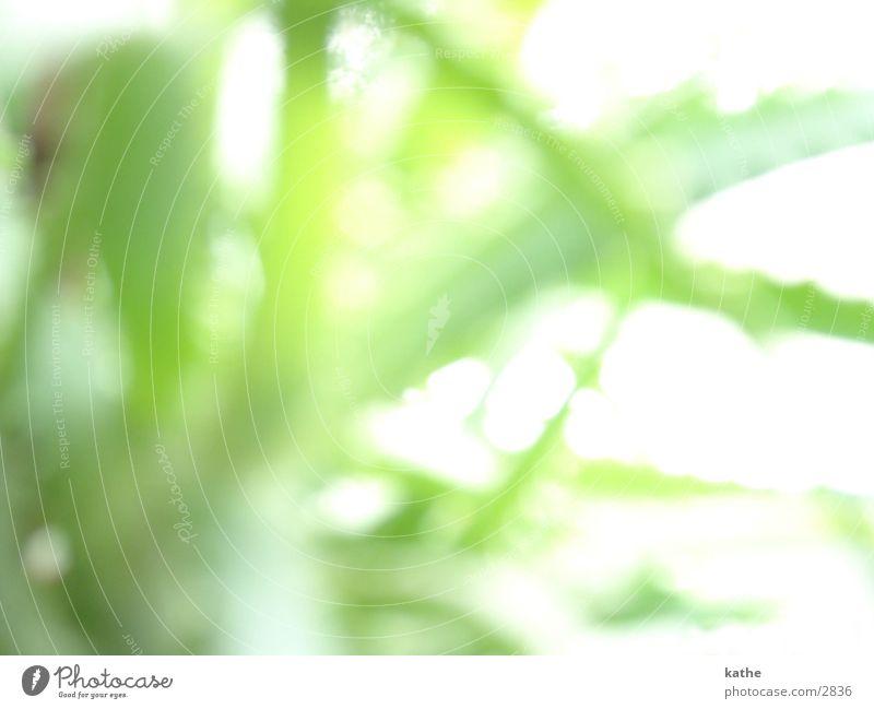 window sill04 Aloe Plant Green Window board Blur Light