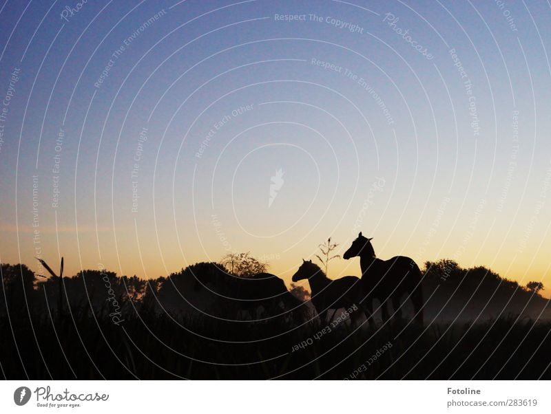 Good morning! Environment Nature Landscape Plant Animal Sky Cloudless sky Autumn Tree Grass Meadow Pet Horse 2 Dark Natural Pasture Colour photo Subdued colour