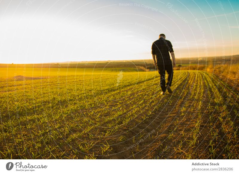 Man walking on sunny field Field Joy Summer Freedom Nature Action Human being Youth (Young adults) Meadow Grass Energy Green Lifestyle Running enjoying