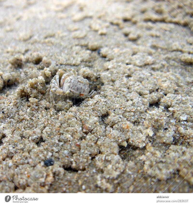 Nature Ocean Beach Animal Environment Coast Small Sand Natural Earth Wild animal Wet Elements Shrimp
