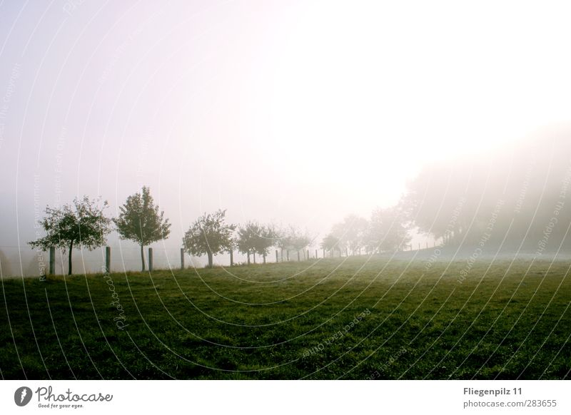 morning mood Environment Nature Landscape Earth Sun Weather Fog Ice Frost Plant Tree Grass Foliage plant Park Meadow Exceptional Dark Cold Green Moody Attentive
