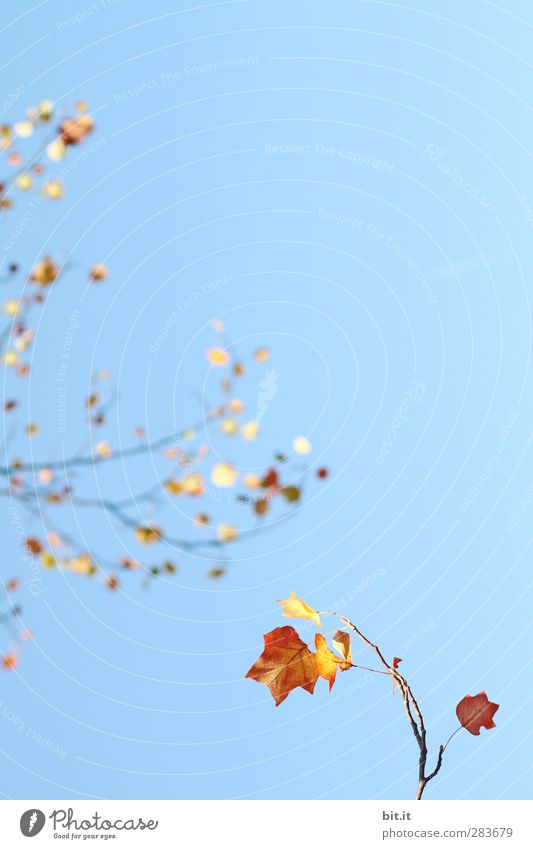 Sky Nature Blue Plant Tree Leaf Yellow Environment Autumn Air Horizon Gold Climate Glittering Bushes Beautiful weather