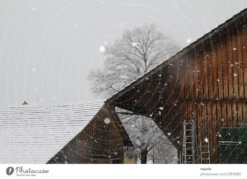 onset of winter Environment Nature Plant Sky Winter Snow Snowfall Tree Barn Farm Cold Gloomy Brown Gray White Colour photo Exterior shot Deserted